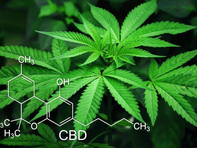Jak uprawiać marihuanę w środowisku wodnym?